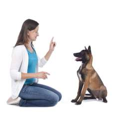 dog-training-using-the-3-ds