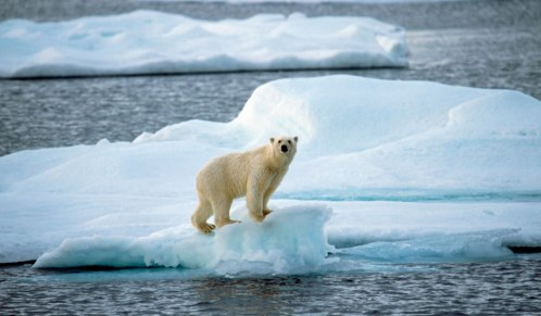 blog-1024x600-polar-bear-on-shrinking-ice-sven-erik-arndt-universal-images-group-newscom-uigphotos235623.jpguigphotos235623