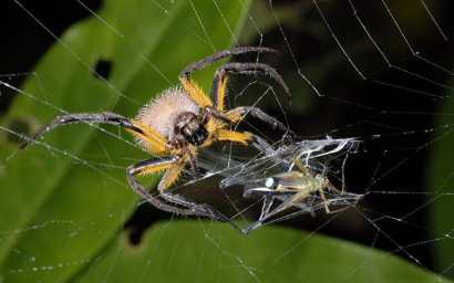 spider-frog-xlarge_trans_nvbqzqnjv4bqqvzuuqpflyliwib6ntmjwfsvwez_ven7c6bhu2jjnt8